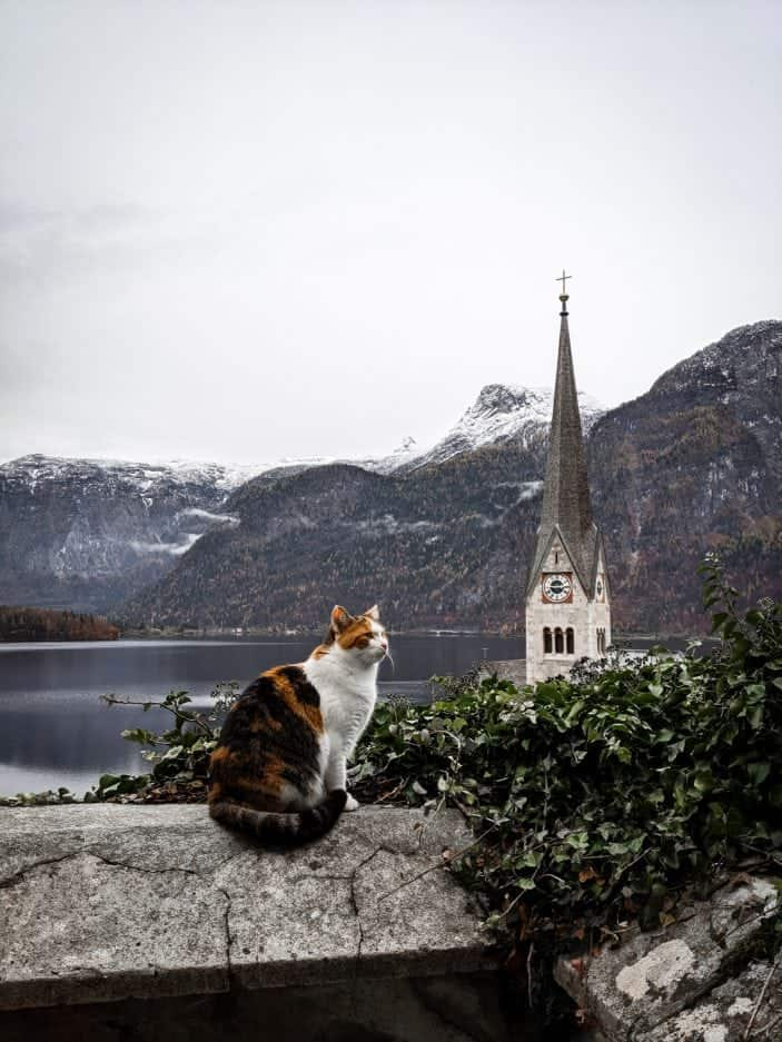 1 Week in Austria - cat in Hallstatt
