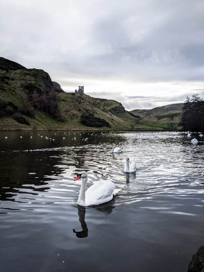 Edinburgh lake with swans - Backpacking in Europe